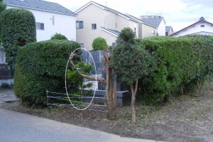 202007-hedge-trimming